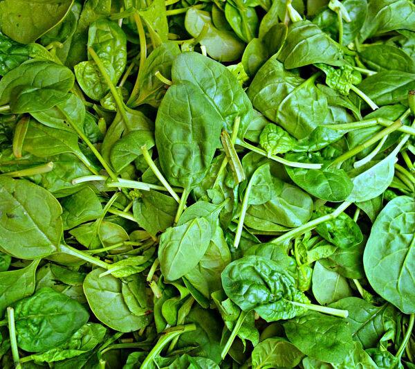 Légumes de février